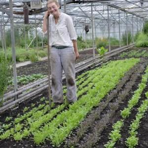 Cara GWG lettuce