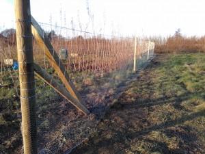 Creating a community tree nursery