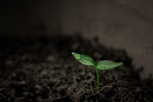 Cultivating soil, soul and imagination.